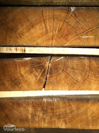 Coupe transversale d'un tronc arbre